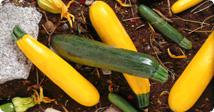 It's zucchini season!